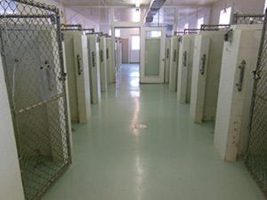 Interior Kennels
